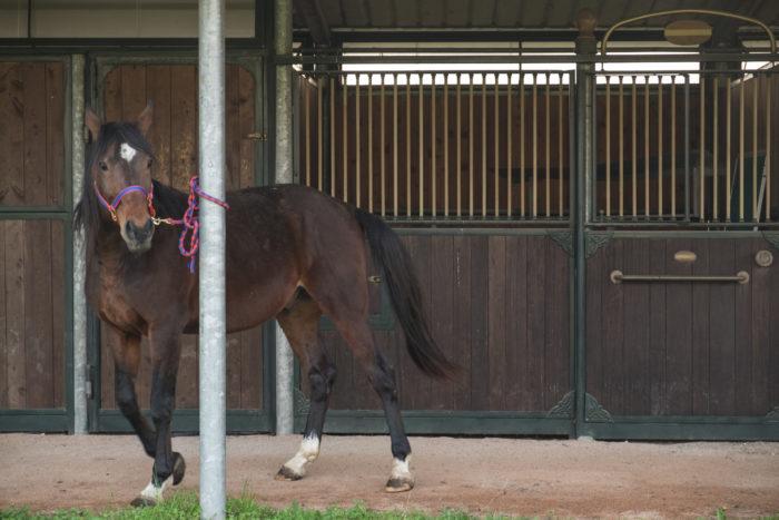 Cavallo-UNIRELAB